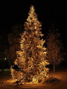 _DSC4543_weihnachtsbaum